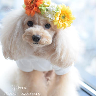 ガーベラ花かんむり・3カラー