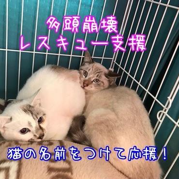 【寄付】猫の名前を付けて応援!(多頭崩壊レスキュー支援)