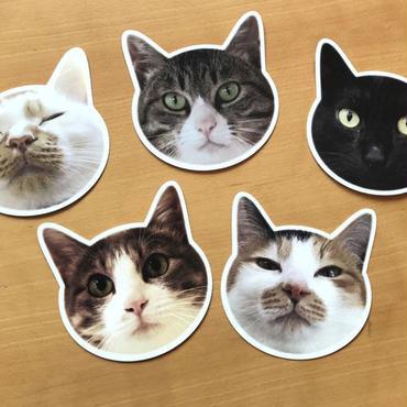猫型ポストカード10種類コンプリートセット
