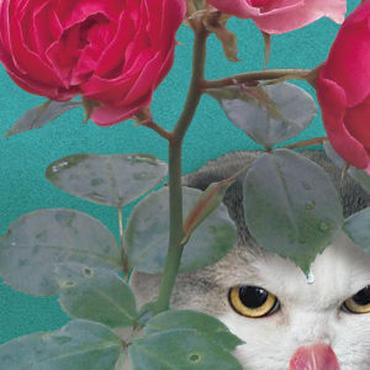 猫託ポストカード「鬼の居ぬ間に洗濯」2枚セット