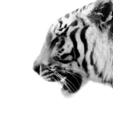 Tiger(とら)