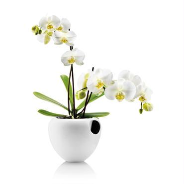 eva solo orchidpot WHITE
