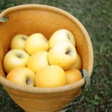 減農薬のレスキューりんご(3kg/12個前後)  とりんごジュースのセット