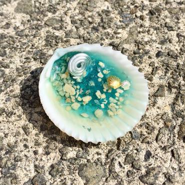 貝のオルゴナイトSB
