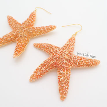 Suger Starfish Pirce