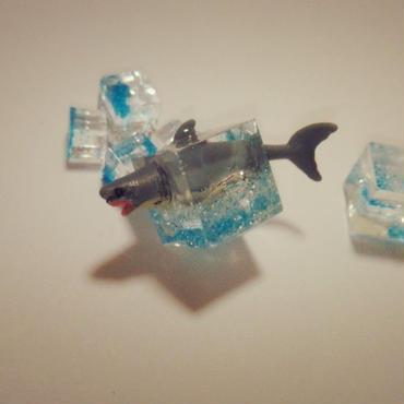 ホオジロザメ泳ぐってよ