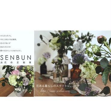 お花の定期便(月1回)送料無料