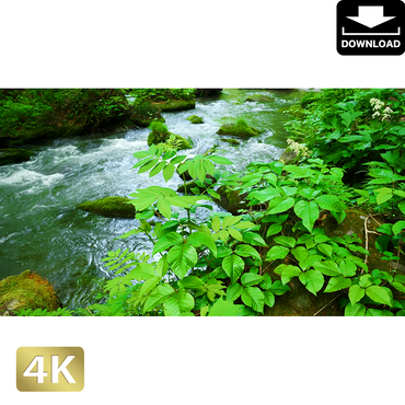 2035089 ■ 奥入瀬渓流 渓流