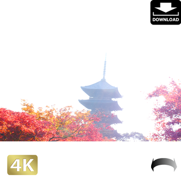 2043032 ■ 京都 東寺の紅葉