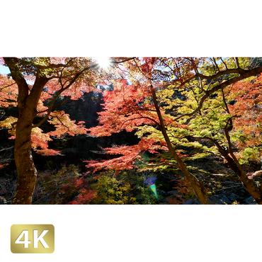 1015002 ■ 昇仙峡 紅葉