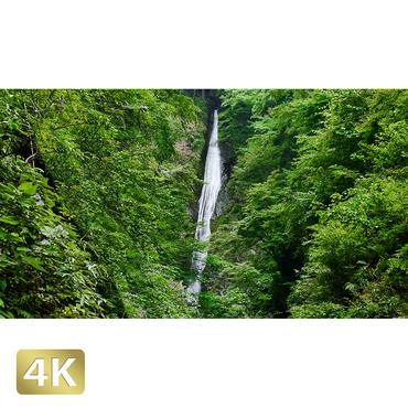 1010025 ■ 静岡 浄蓮の滝