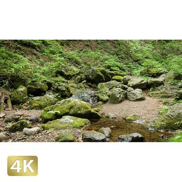 1037044 ■ 御岳山 ロックガーデン