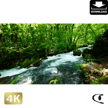 2035017 ■ 奥入瀬渓流 阿修羅の流れ