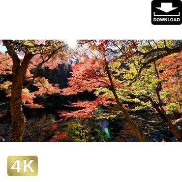 2015002 ■ 昇仙峡 紅葉