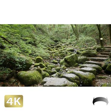 1037052 ■ 御岳山 ロックガーデン