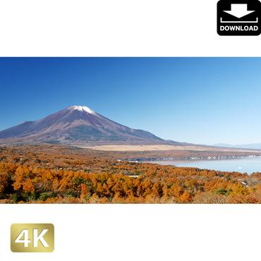 2015021 ■ 富士山 紅葉