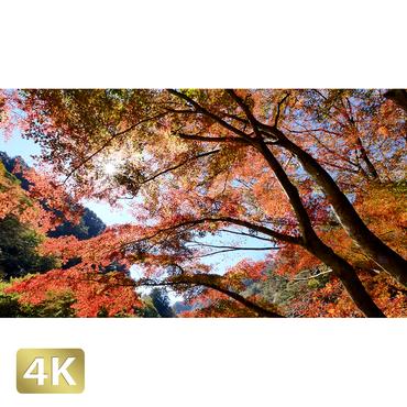 1015005 ■ 昇仙峡 紅葉