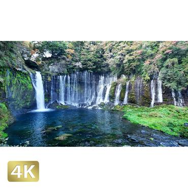 1016017 ■ 静岡 白糸の滝