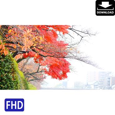 4043104 ■ 京都 紅葉 鴨川