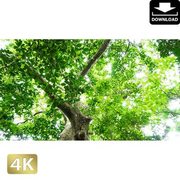 2022038 ■ 石垣島 大樹