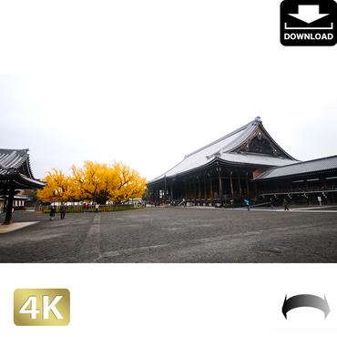 2043126 ■ 京都 西本願寺 紅葉