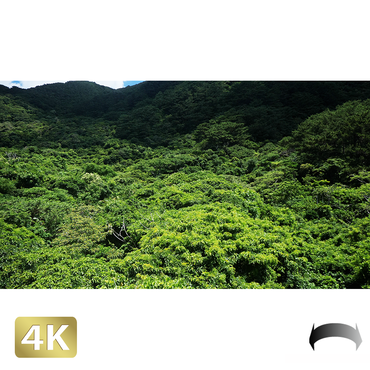 1038070 ■ 石垣島 於茂登岳