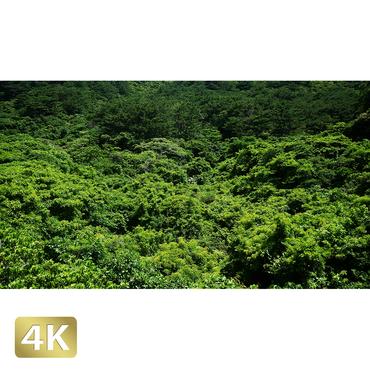 1038067 ■ 石垣島 於茂登岳