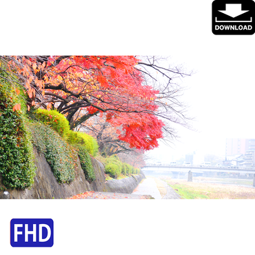 4043105 ■ 京都 紅葉 鴨川