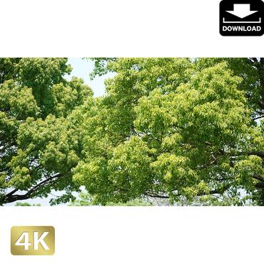 2034010 ■ 渡良瀬遊水池 樹木