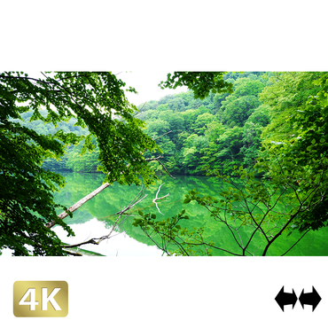 1036002 ■ 白神山地 十二湖 鶏頭場の池