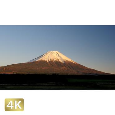 1018057 ■ 富士山 朝霧高原
