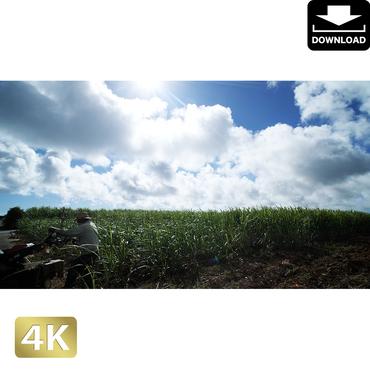 2041187 ■ 宮古島 畑