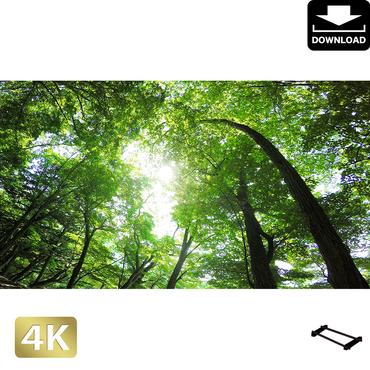 2003001 ■ 日光 中禅寺湖畔 林