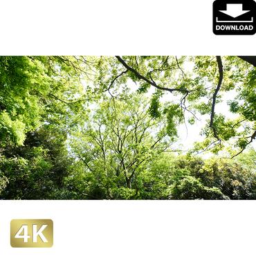 2033032 ■ 柿田川