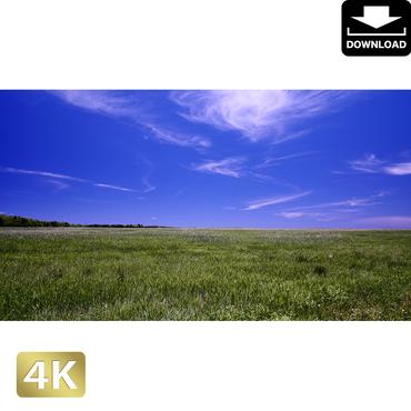 2026026 ■ 黒島 草原