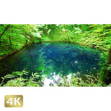 1036004 ■ 白神山地 十二湖 青池