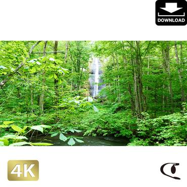 2035073 ■ 奥入瀬渓流 白布の滝