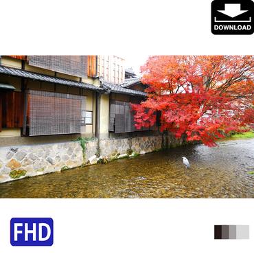4043070 ■ 京都 紅葉 アオサギ