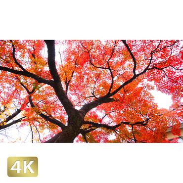 1043084 ■ 京都 紅葉