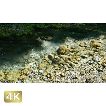 1005017 ■ 秋川渓谷 山女魚