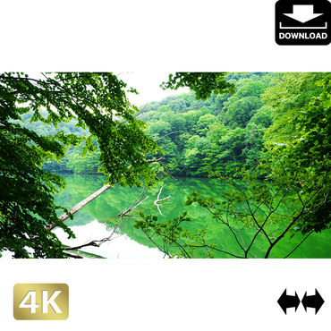 2036002 ■ 白神山地 鶏頭場の池
