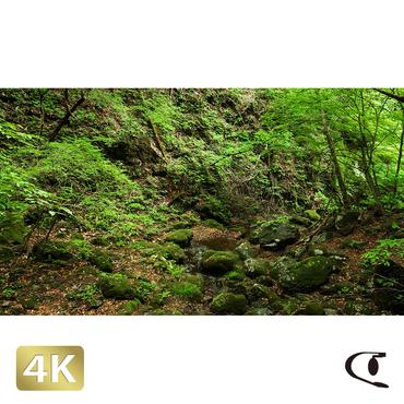 1037054 ■ 御岳山 ロックガーデン