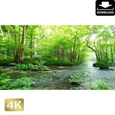 2035092 ■ 奥入瀬渓流 白糸の滝