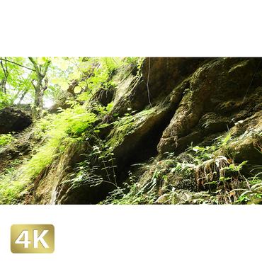 1037059 ■ 御岳山 七代の滝