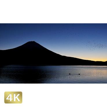 1018077 ■ 富士山 田貫湖