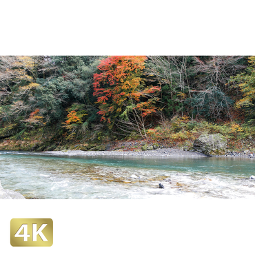 1017012 ■ 奥多摩 多摩川 紅葉