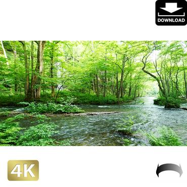 2035093 ■ 奥入瀬渓流 白糸の滝