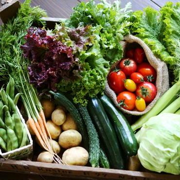 野菜セット大 農薬・化学肥料不使用