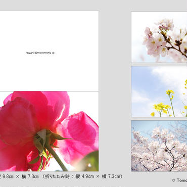Tomomi HASEGAWA 折りたたみ式メッセージカード(春花) 4枚セット
