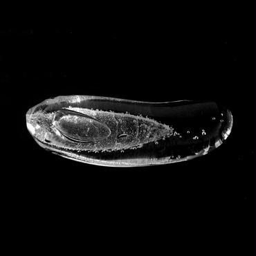 「森に棲むものたちの器。」#04, gla_gla , 2016 , ガラス, MUSEUM STORE 限定